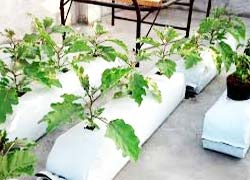 Hydroponic Grow Bags | Pioneer Agro Industries | Grow Bags Manufacturer | Terrace Gardening | Green Garden Services