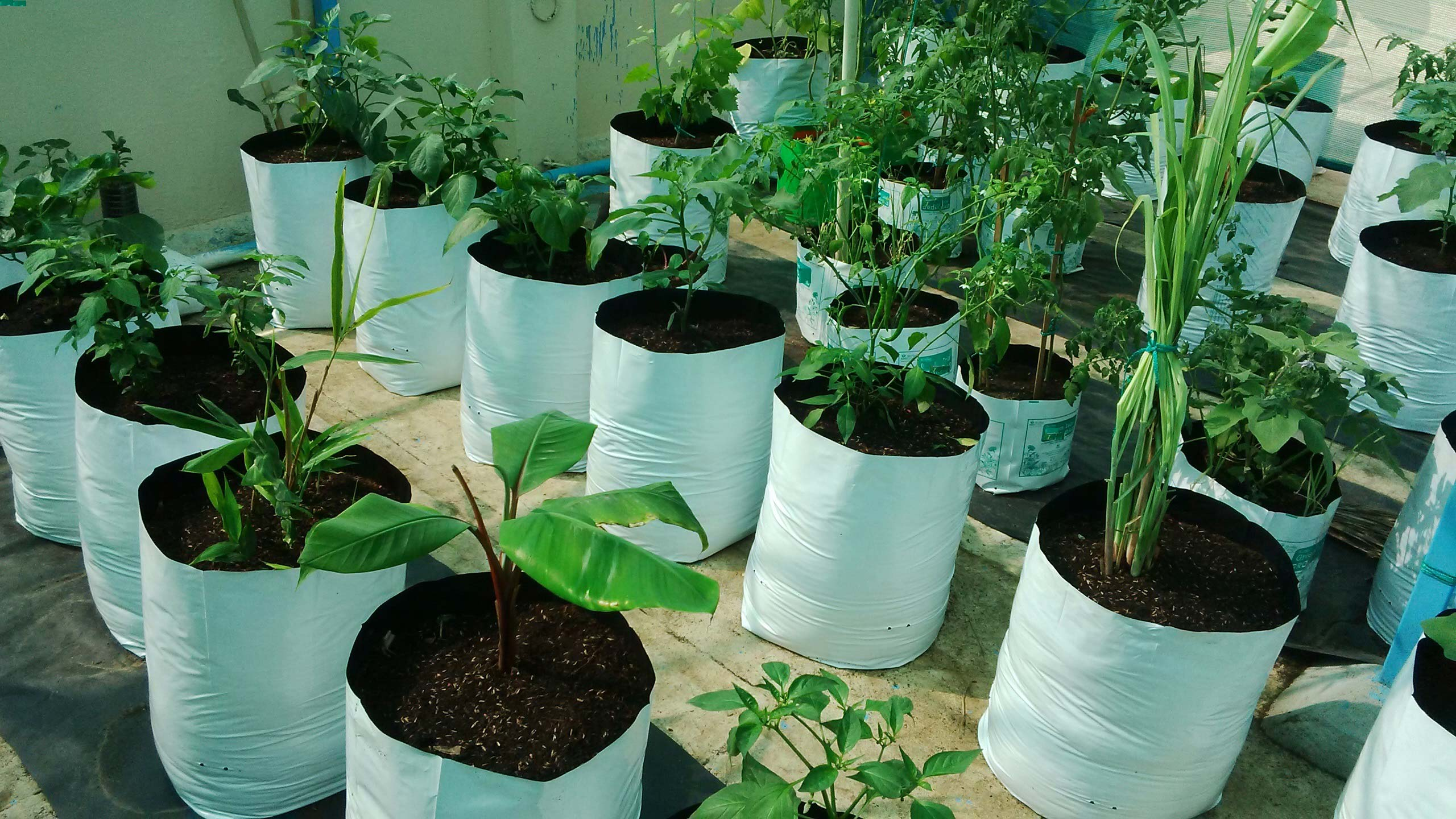 Image Result For Vegetable Seeds For Container Gardening