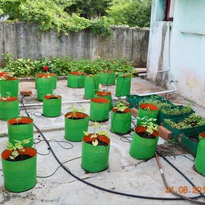 Organic Seeds | Pioneer Agro Industries | Terrace Gardening | Green ...